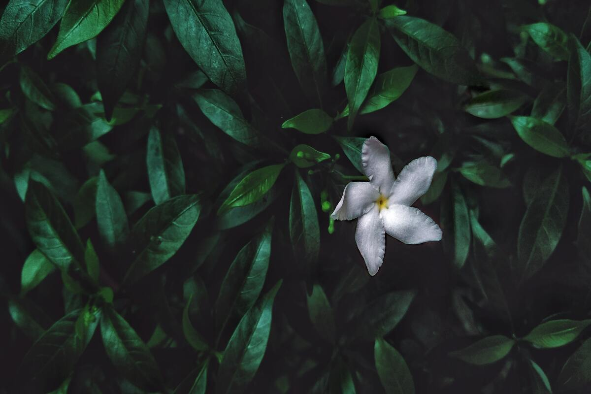 fiori notturni - caratteristiche