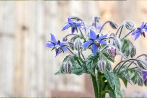 Quali erbe di campo raccogliere in primavera?