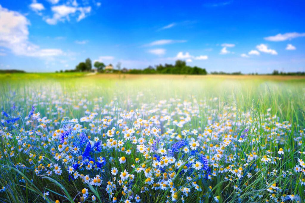Cosa provano fiori e piante