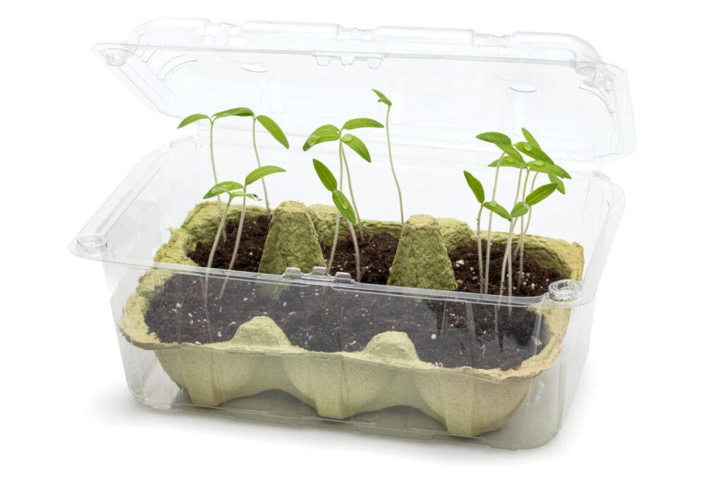 Come costruire una mini serra