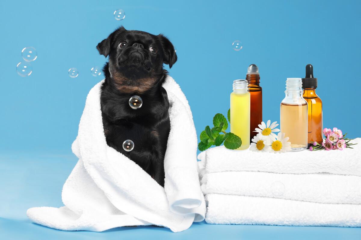Aromaterapia per cani e gatti