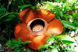 piante più profumate al mondo