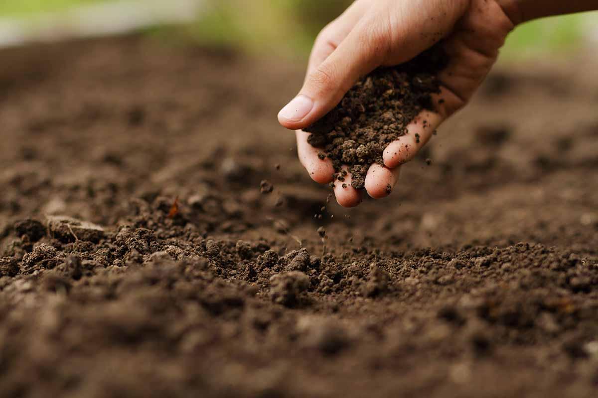 Come conservare i preparati biodinamici