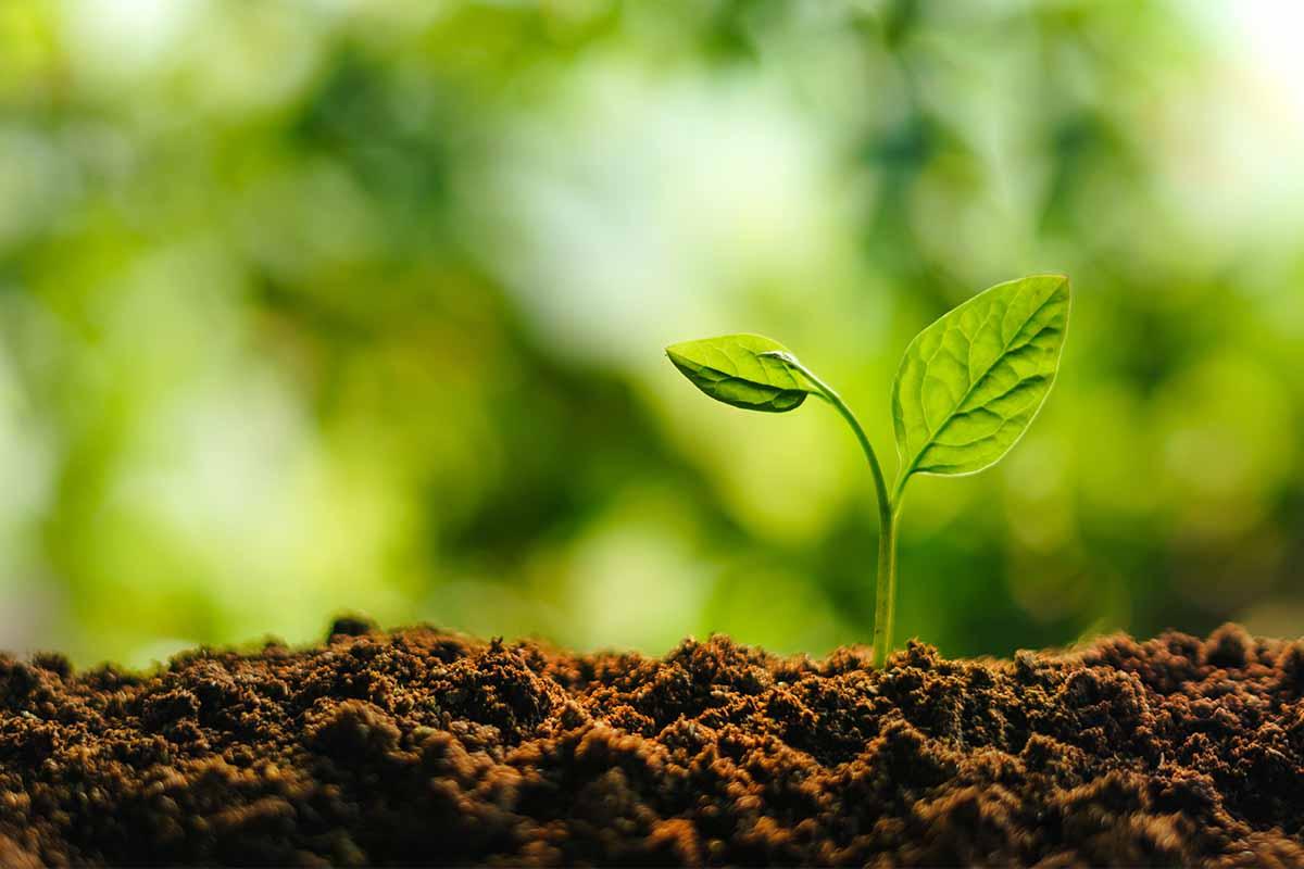 L'orto e le coltivazioni più redditizie