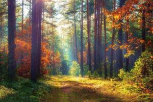 Vivere nel rispetto della natura