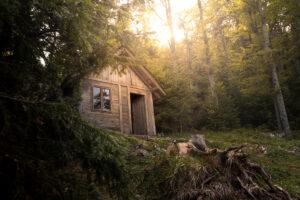 Le regole per vivere nel bosco
