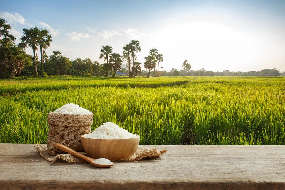 Mercato del riso