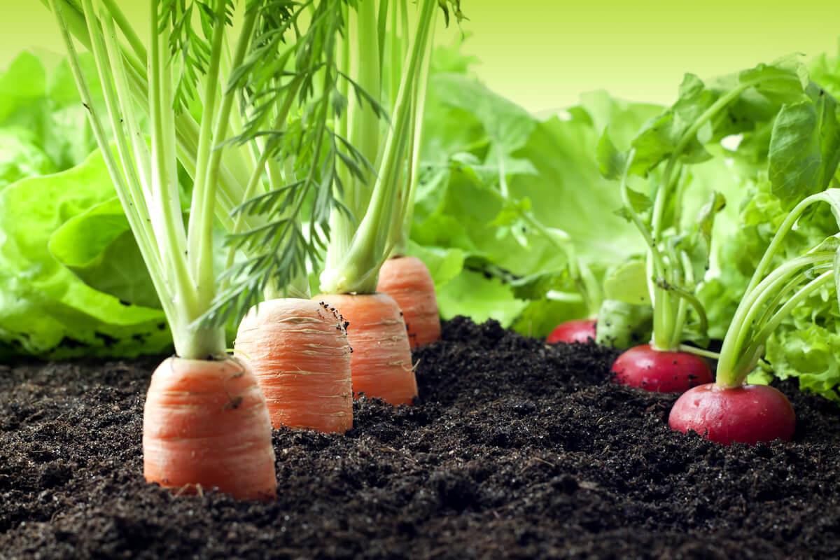 Coltivare l'orto sinergico