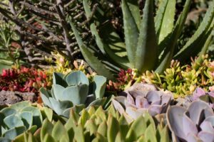 piante grasse aiuola