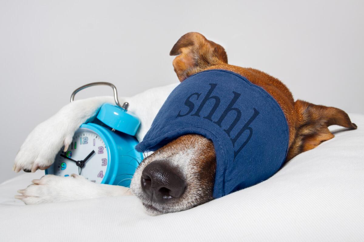 Come dormono i cani