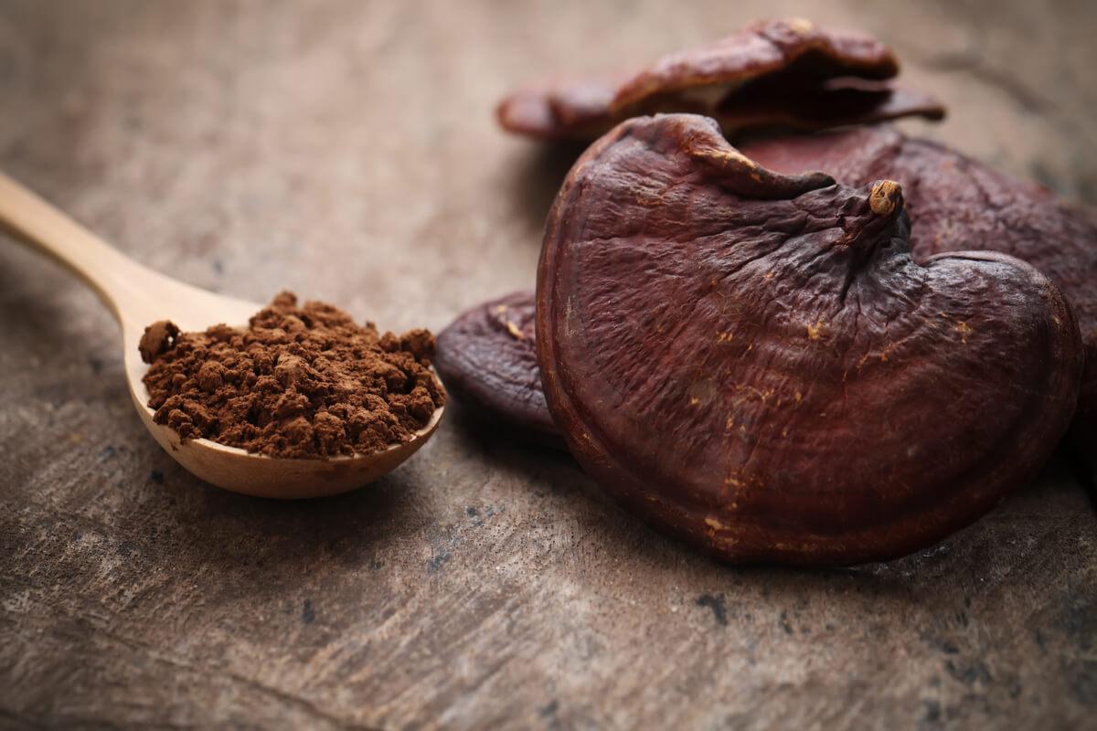 Reishi, il fungo dell'immortalità - curiosità e benessere