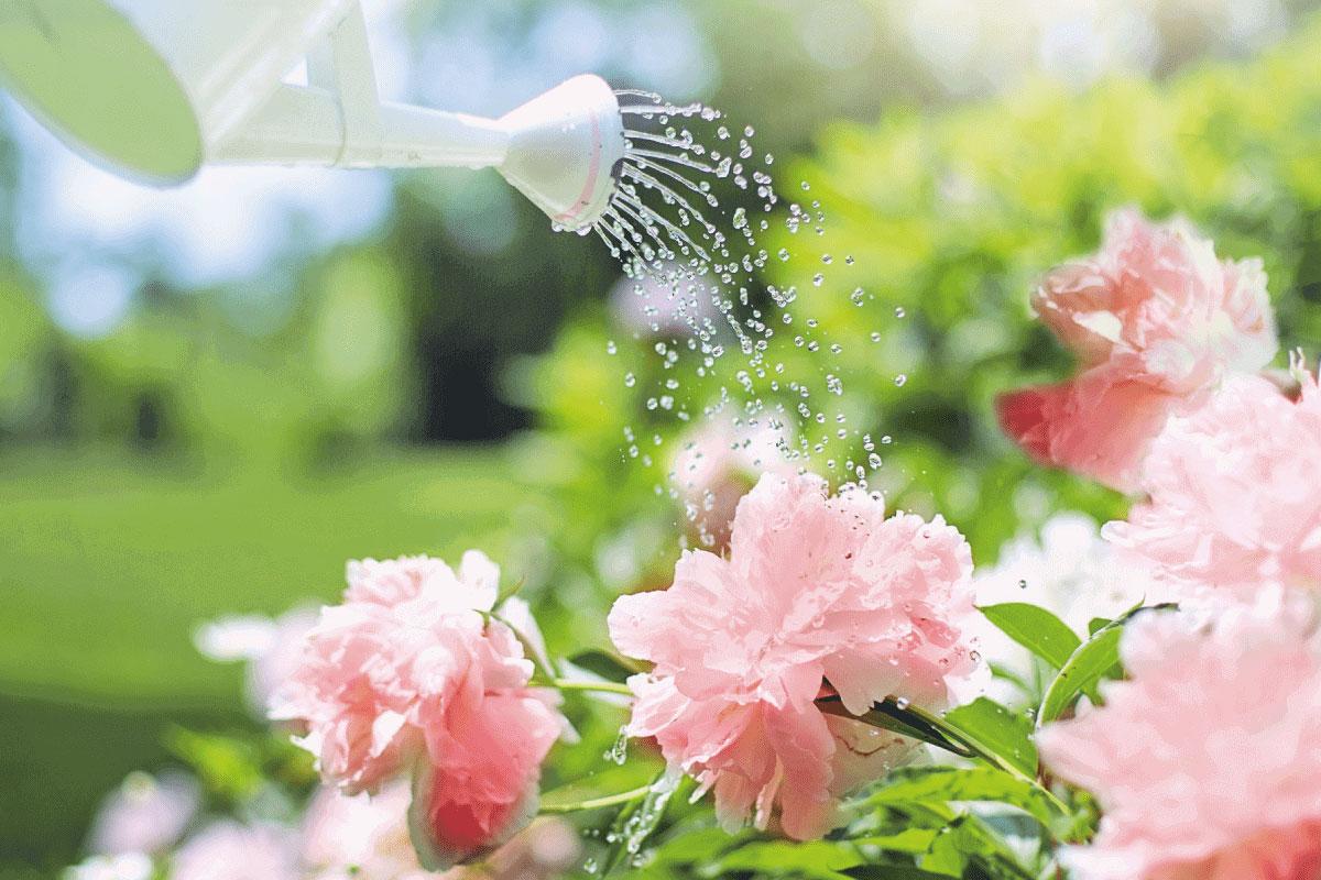risparmiare acqua in giardino ecco come fare