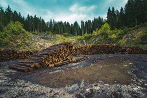 Deforestazione selvaggia cos'è e come fermarla