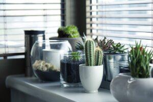 Arredamento ecologico - piante