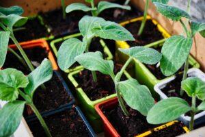 Balcone sostenibile - zucchine