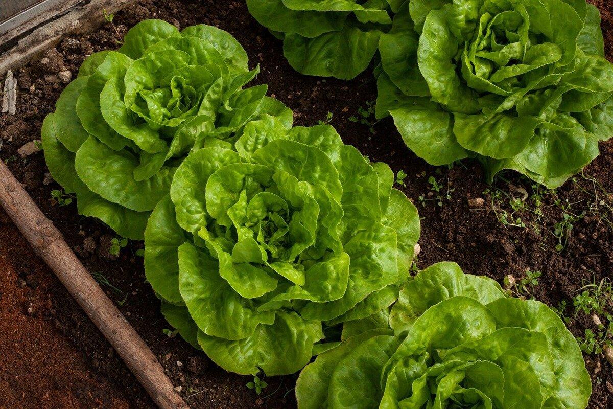 Balcone sostenibile - insalata
