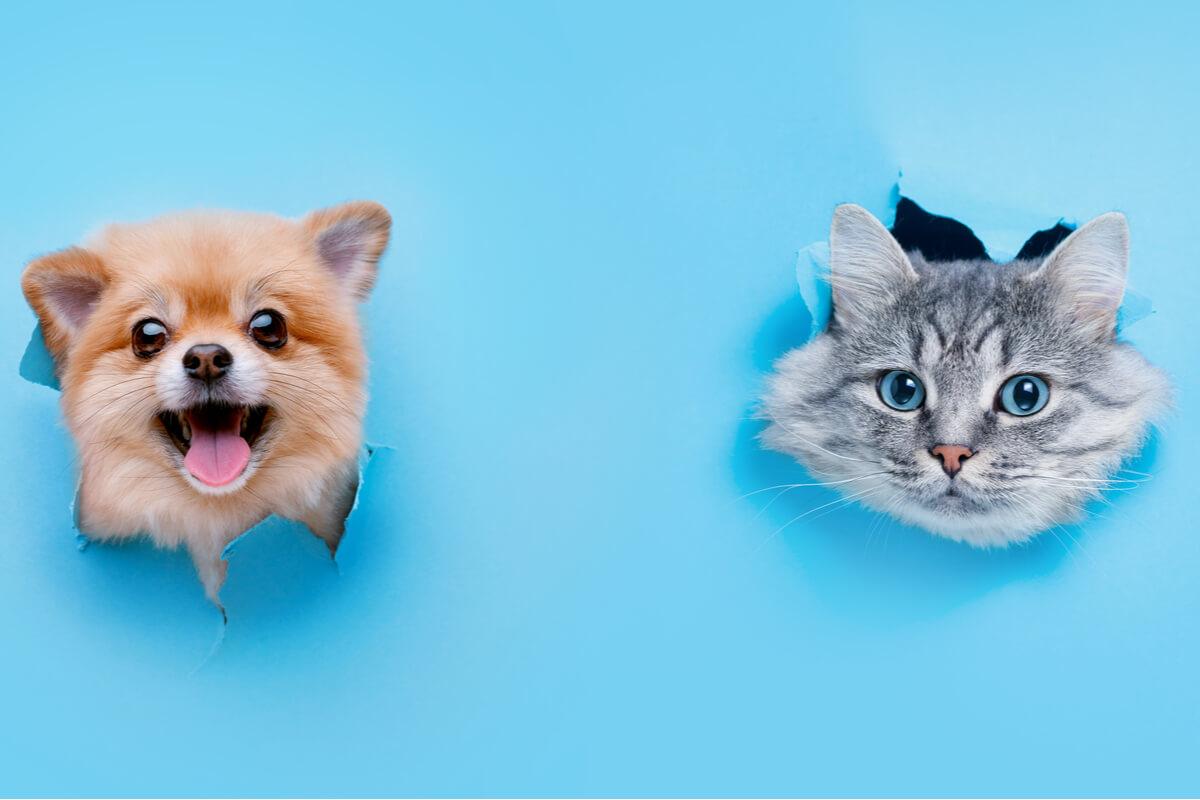 Chi si occupa di cani e gatti durante la vacanza