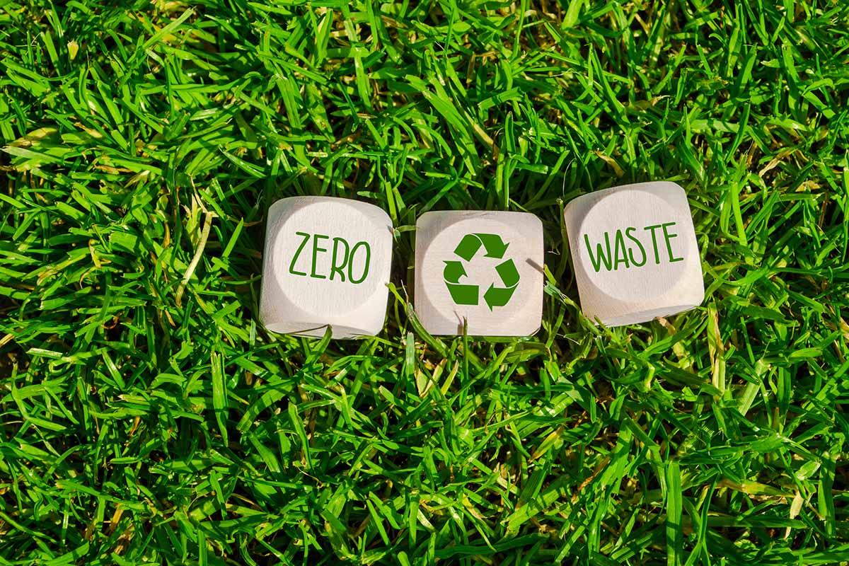 Le iniziative sostenibili nel mondo Innesti il progetto per diffondere la cultura della sostenibilità
