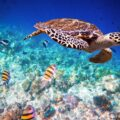 Oggi è la Giornata Mondiale delle tartarughe marine