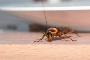 Perché in casa ci sono gli scarafaggi