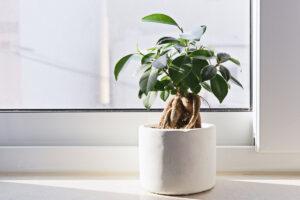 rendere l'aria di casa più sana