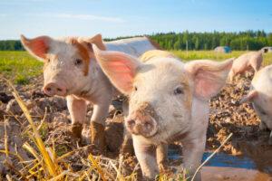 Fondi per le fattorie didattiche