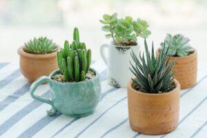portare in casa le piante