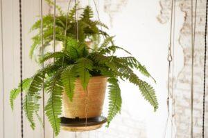 Arredare casa con le piante ricadenti