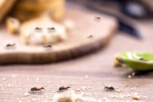 Formiche - cibo