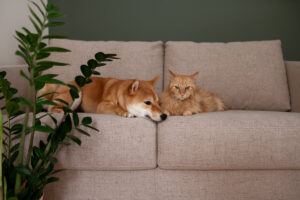 Piante nocive per animali - cani e gatti