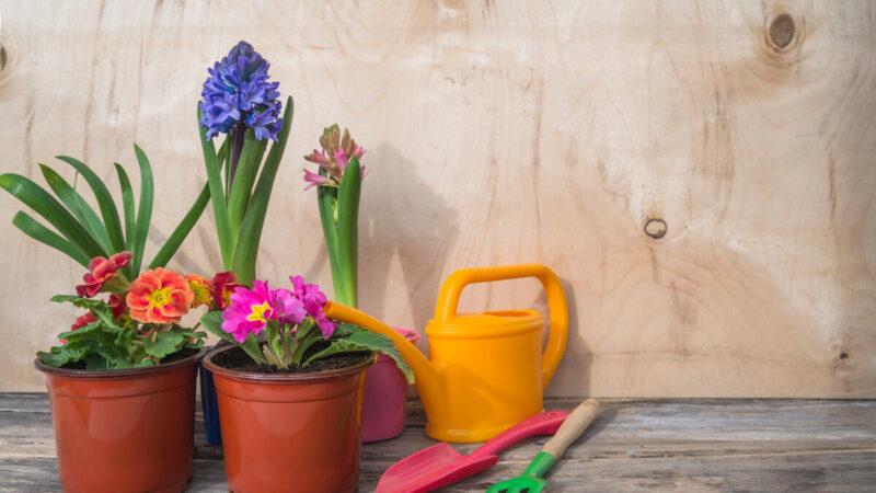 Migliori vasi da giardino