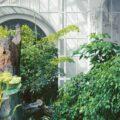 portare il giardino in casa - consigli