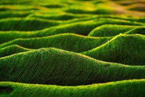 tessuto alghe seacell