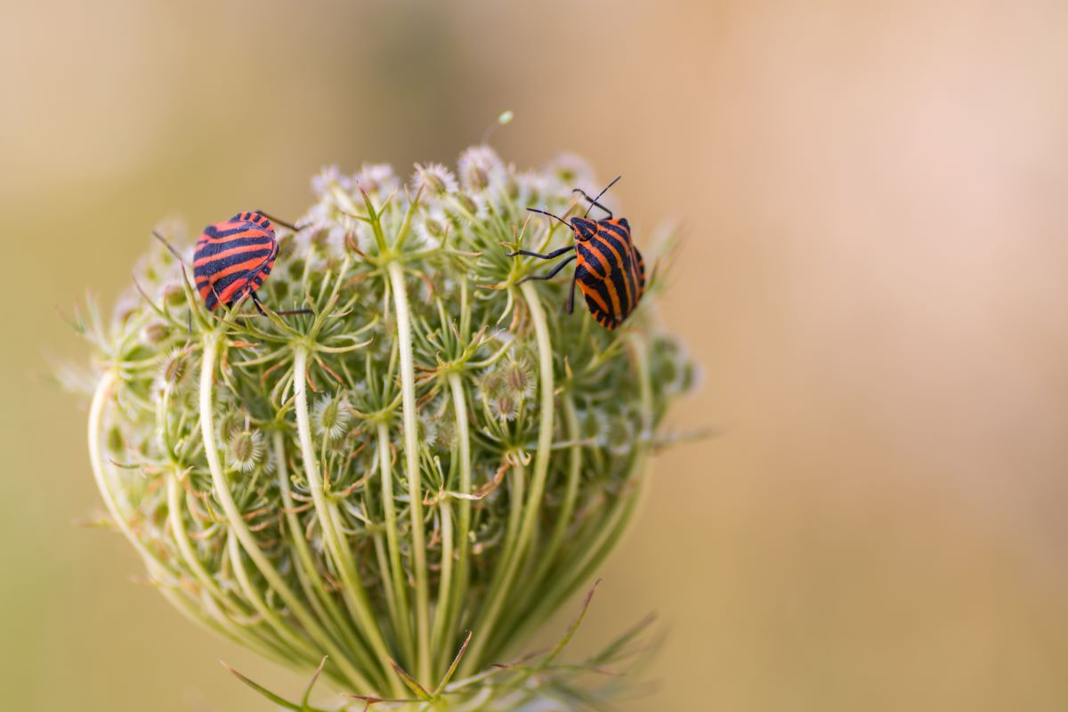 rimedi naturali insetti